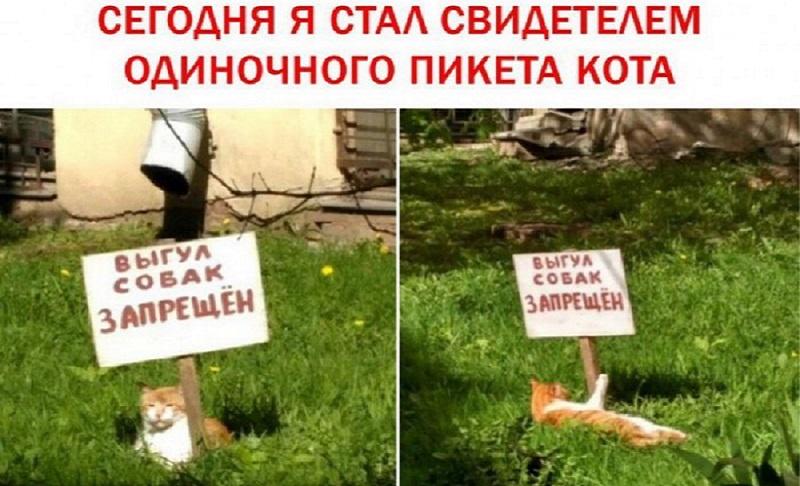 пикет кота