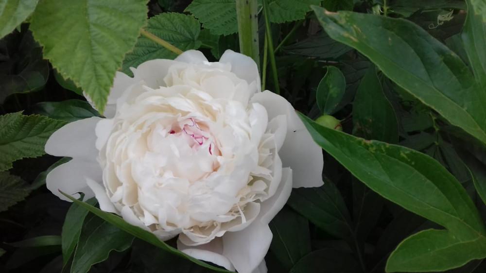 Дачные цветочки 03