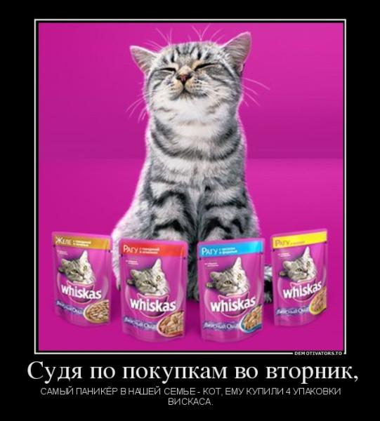 564227_-sudya-po-pokupkam-vo-vtornik_demotivators_to