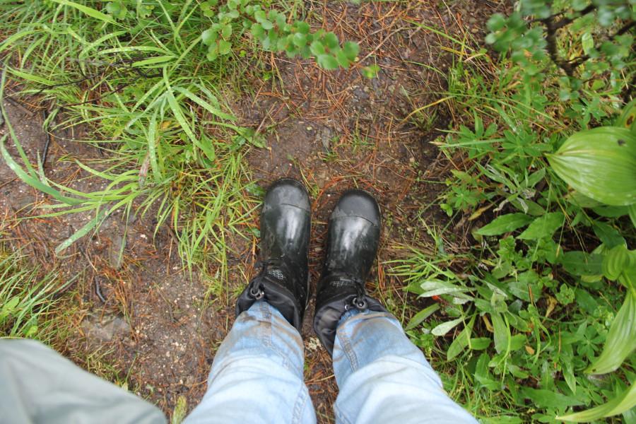 Дождливое утро в Ергаках 11