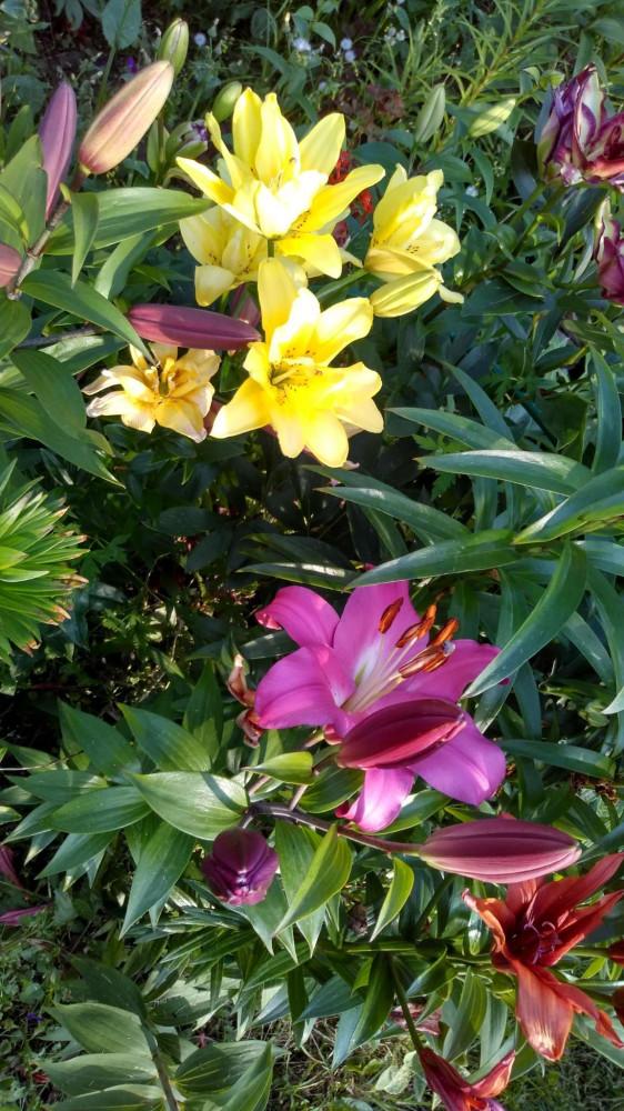 Сибирские цветочки летом 28
