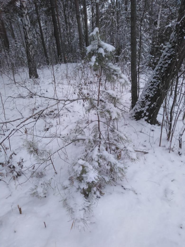 Пришла зима в посёлок Подгорный 36