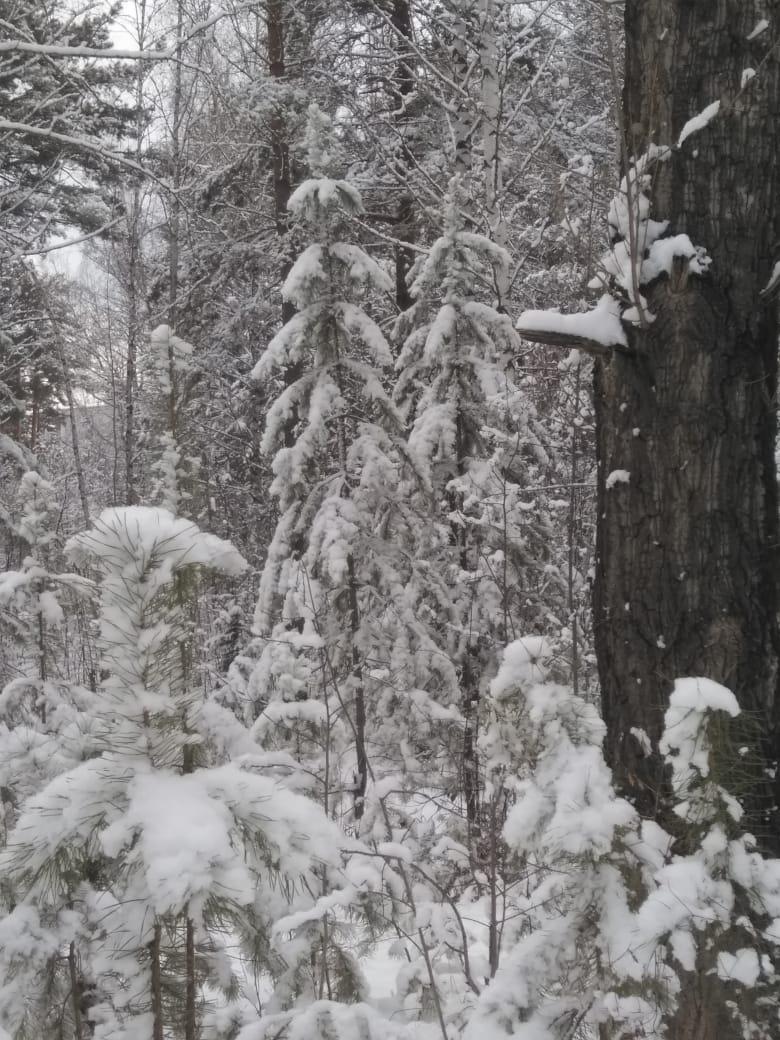 Пришла зима в посёлок Подгорный 39