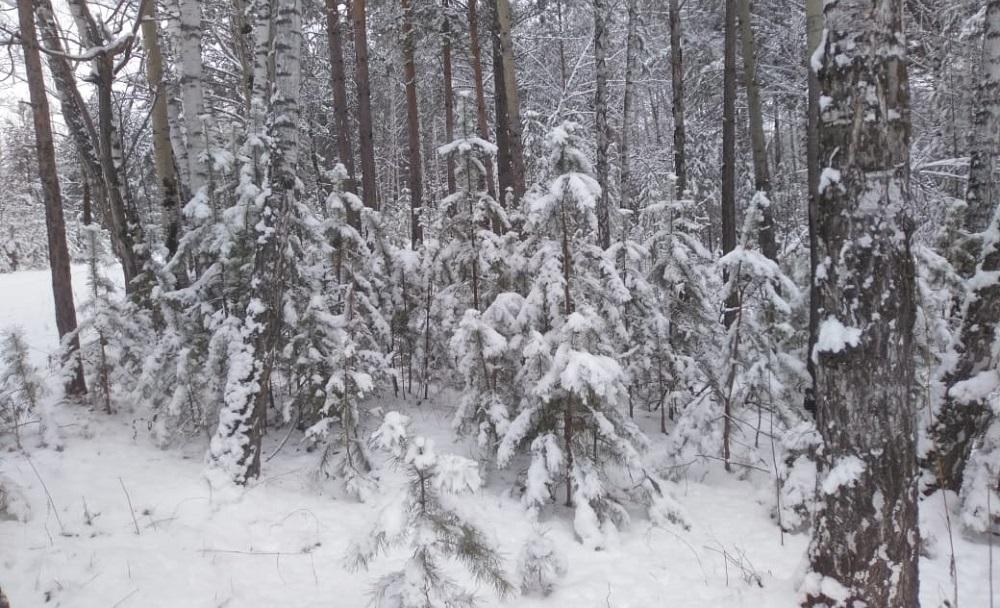Пришла зима в посёлок Подгорный 10