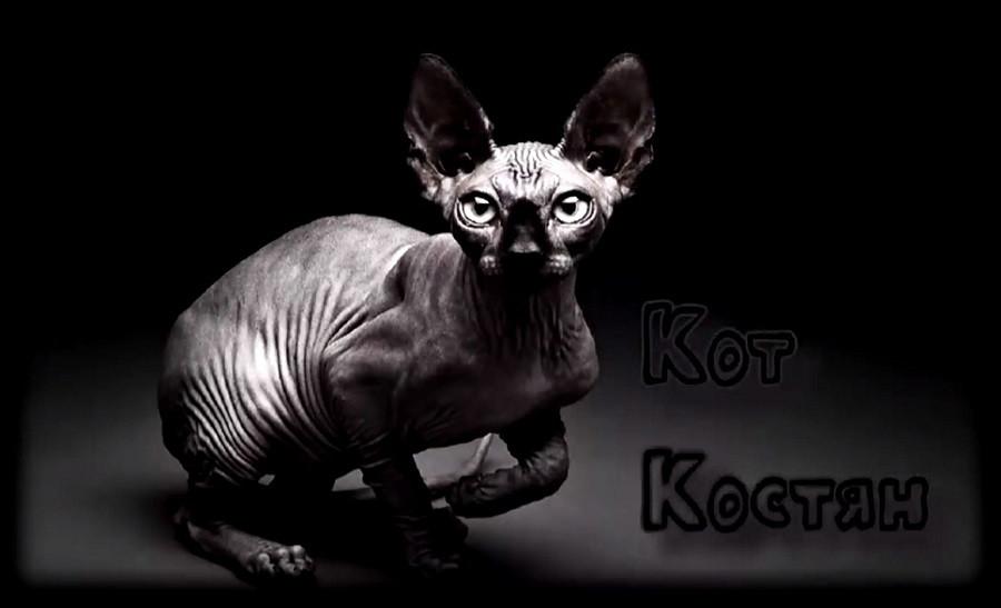 Кот Костян