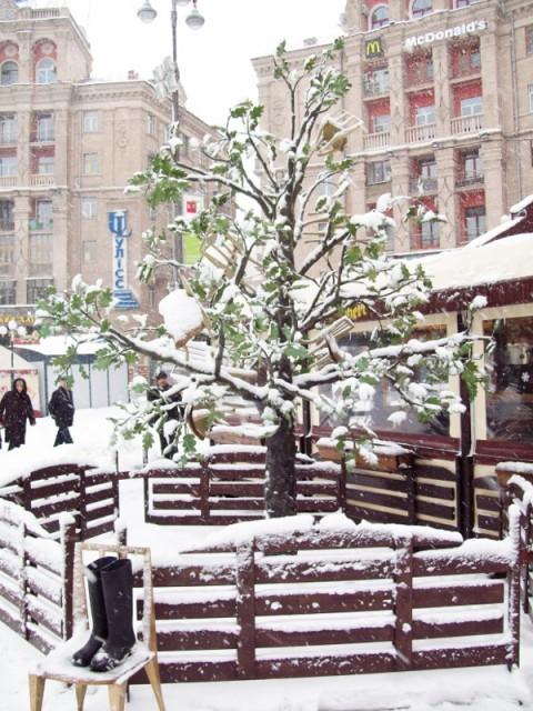 Киев | Дерево 12 стульев на Майдане Незалежности