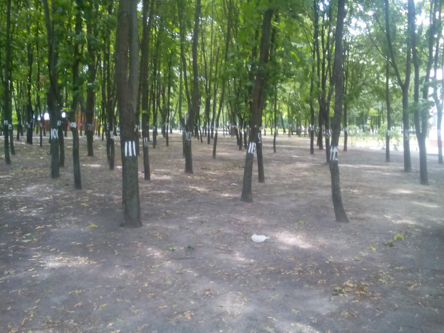 Обыски у мэров Бучи и Ирпеня прошли в рамках дела о хищении 890 га леса, - Луценко - Цензор.НЕТ 6335
