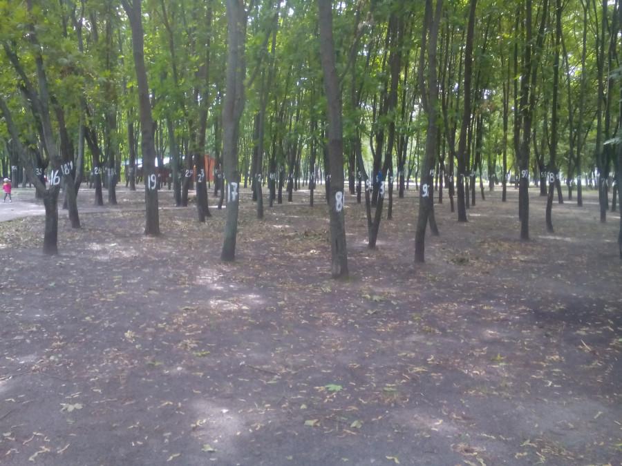Обыски у мэров Бучи и Ирпеня прошли в рамках дела о хищении 890 га леса, - Луценко - Цензор.НЕТ 7122