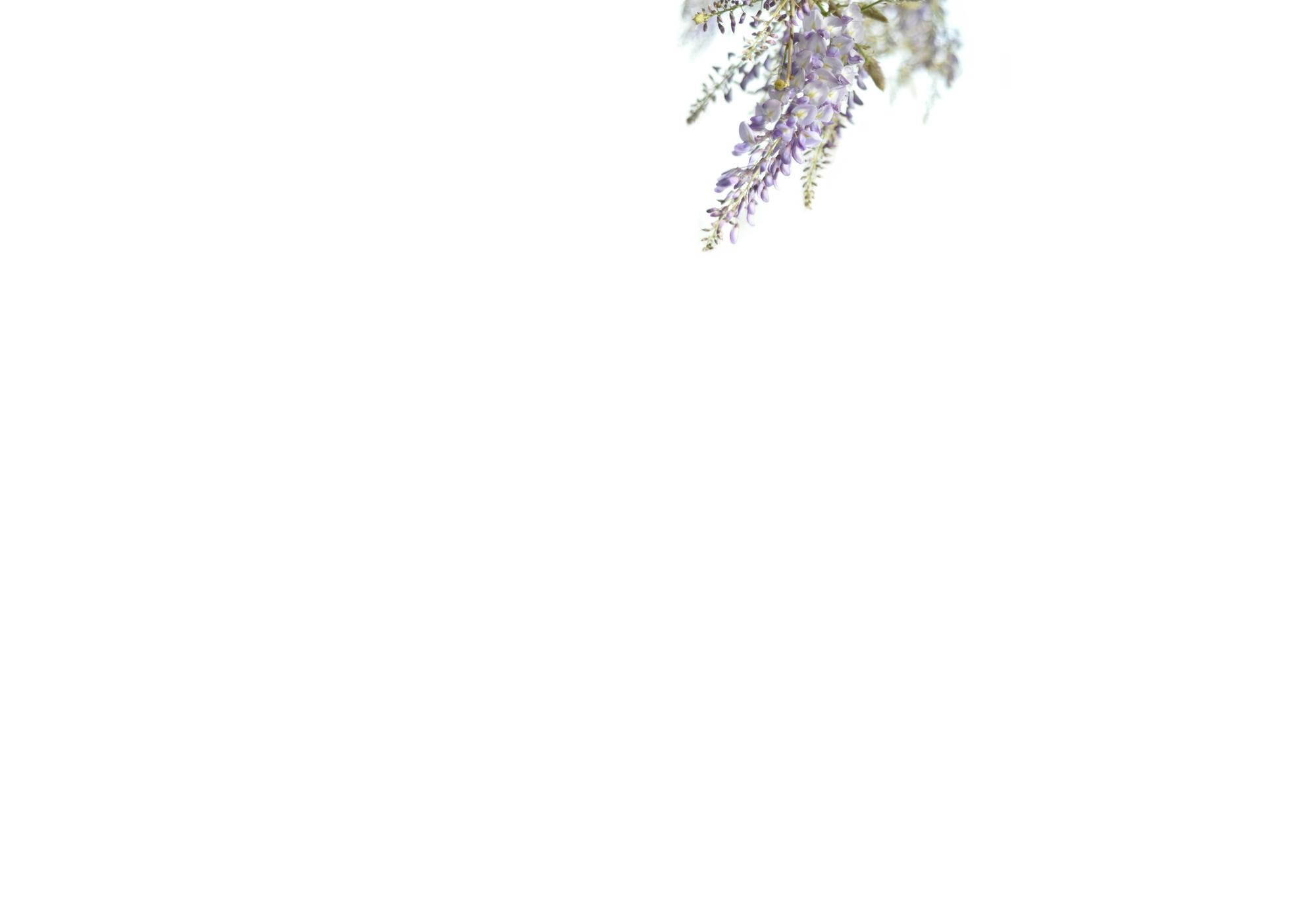 wisteria background