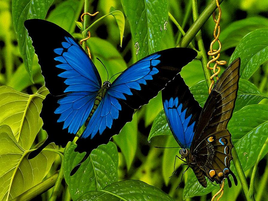 две бабочки-1