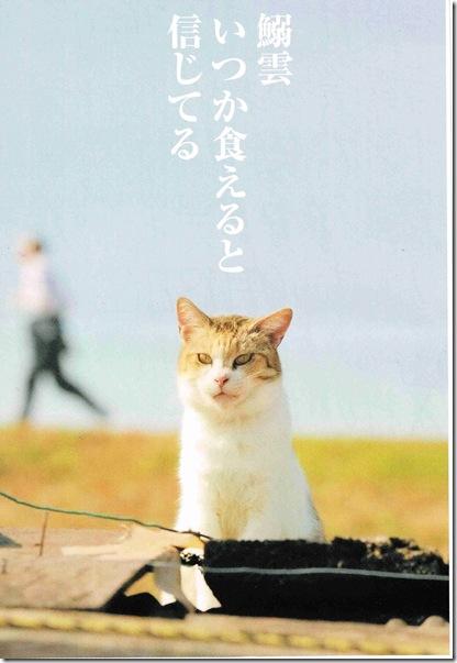 iwashigumo20121015_0001