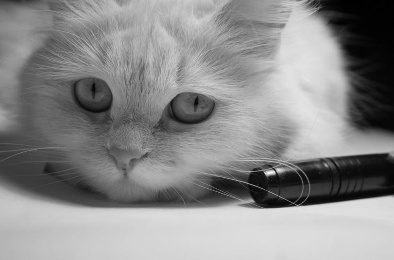 котик-няшка-милашка-фотогеничность-936366