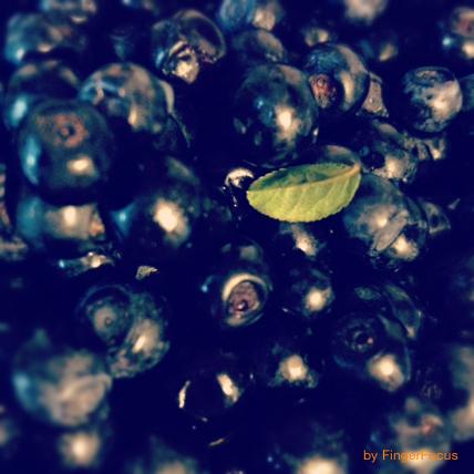 2014_07_24_blueberry nights