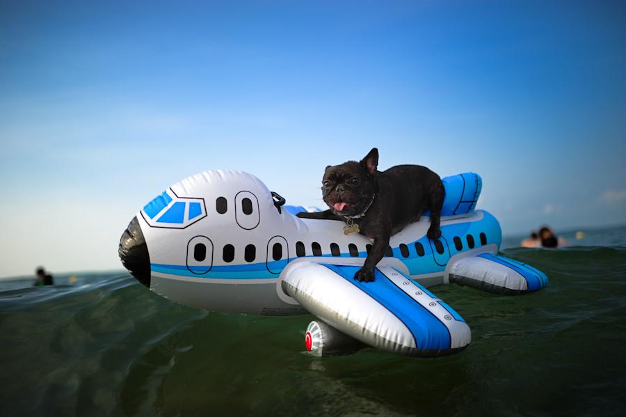 Картинки прикольные самолеты, анимация картинки сладкие