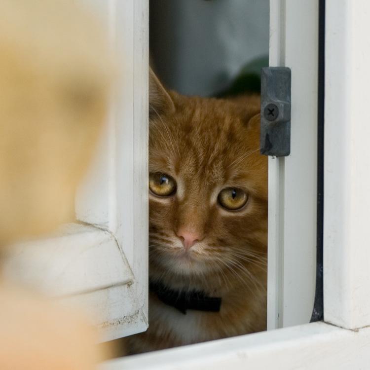 Прикольные картинки демотиваторы с котами