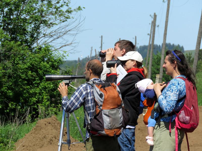 Орнитологическая прогулка в Пихтовке, июнь 2019