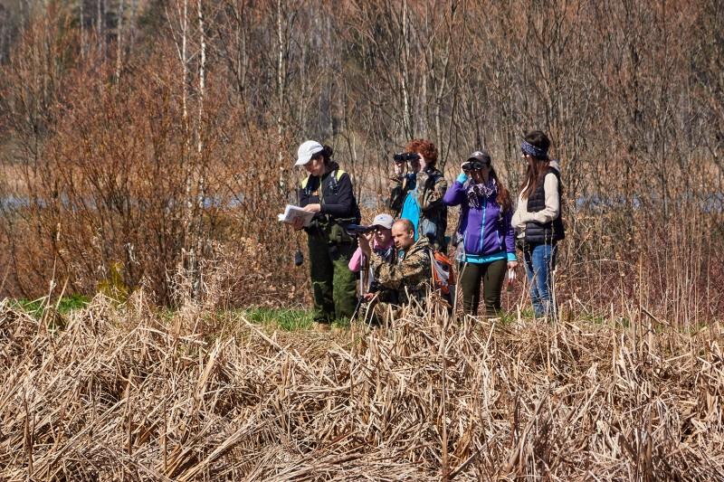 Наблюдения за птицами в Пихтовке, Воткинский район Удмуртии