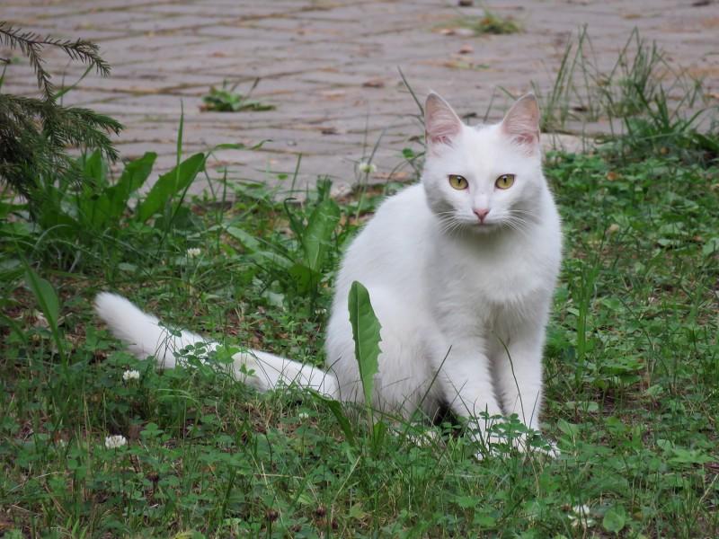 Кошка, которая вела себя, как хозяйка, всюду нас сопровождала