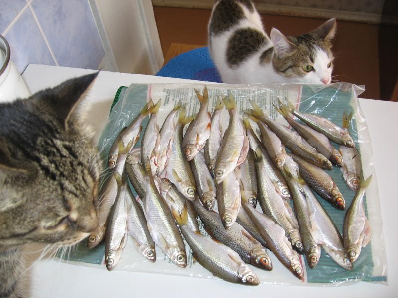 Царапка и Муха возле пойманной рыбы