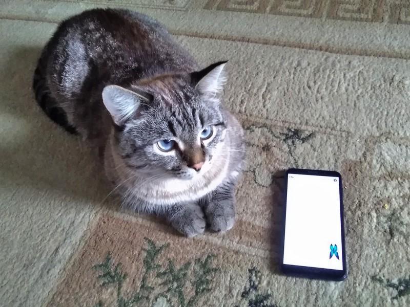 Мурыч и бабочка на смартфоне