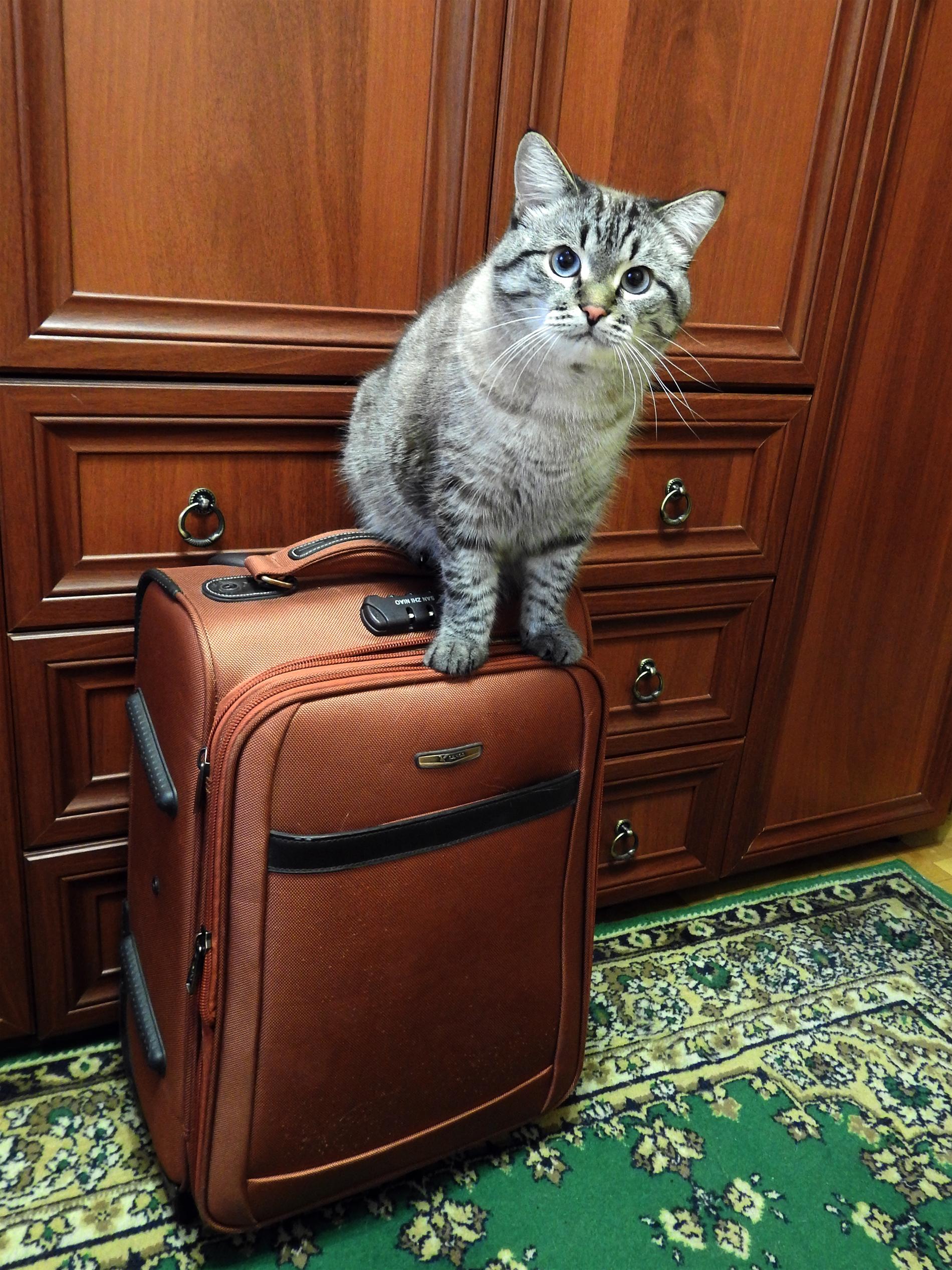 Видавший виды и кошачьи когти чемоданчик