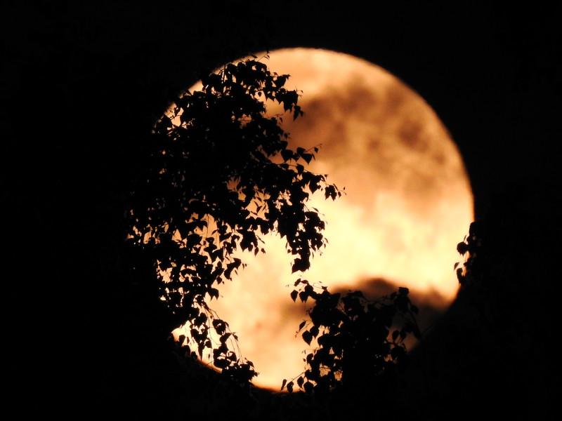 Силуэты деревьев на фоне полной Луны. Nikon P900, съемка с рук.