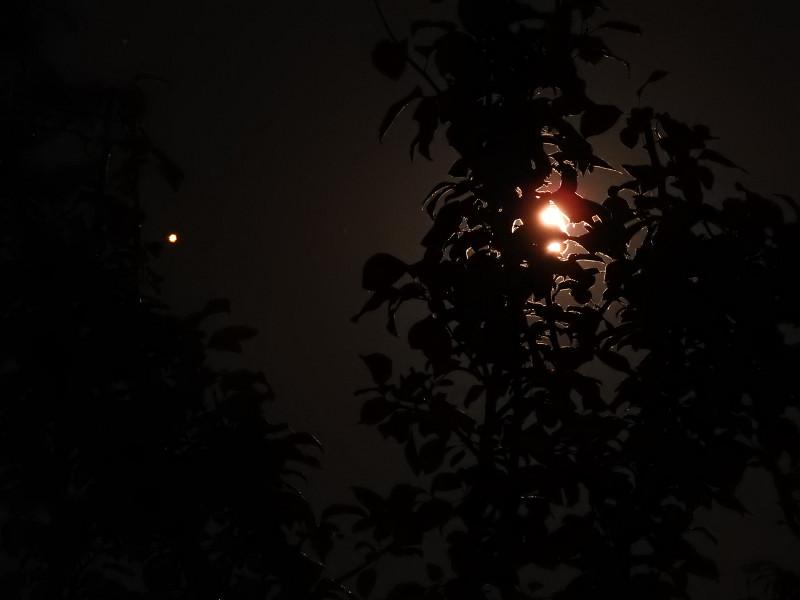 Марс и Луна за кронами деревьев. Фото сделано на Nikon Coolpix P900.