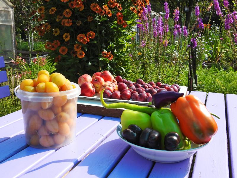 Остатки было роскоши: два вида слив, яблоки и разнообразие перцев
