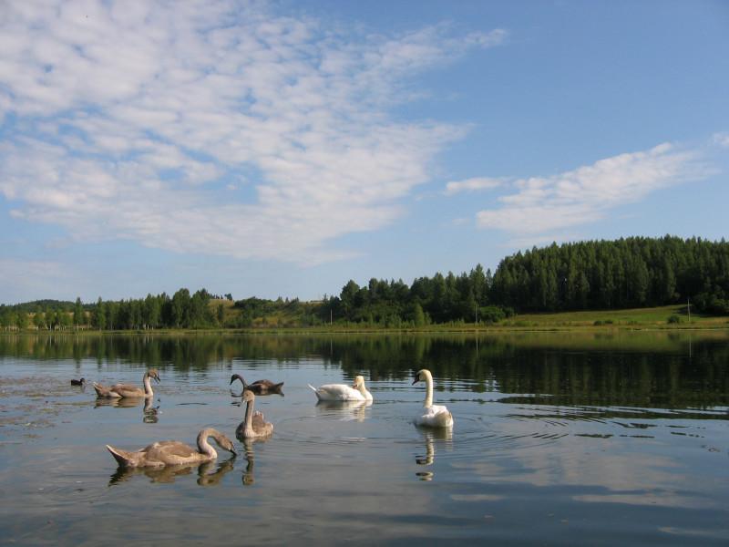 Изборск, 2009 г.