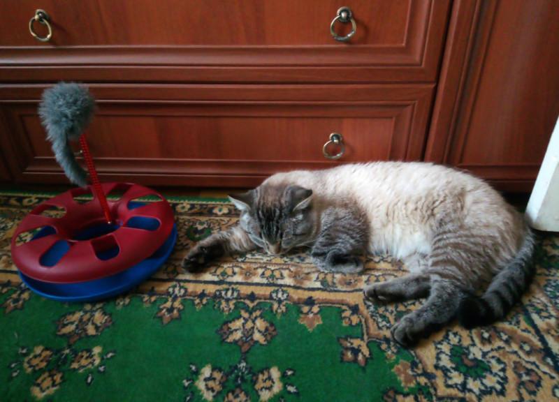 Мурыч спит в любимой позе. 07.11.2018 (3 недели дома)