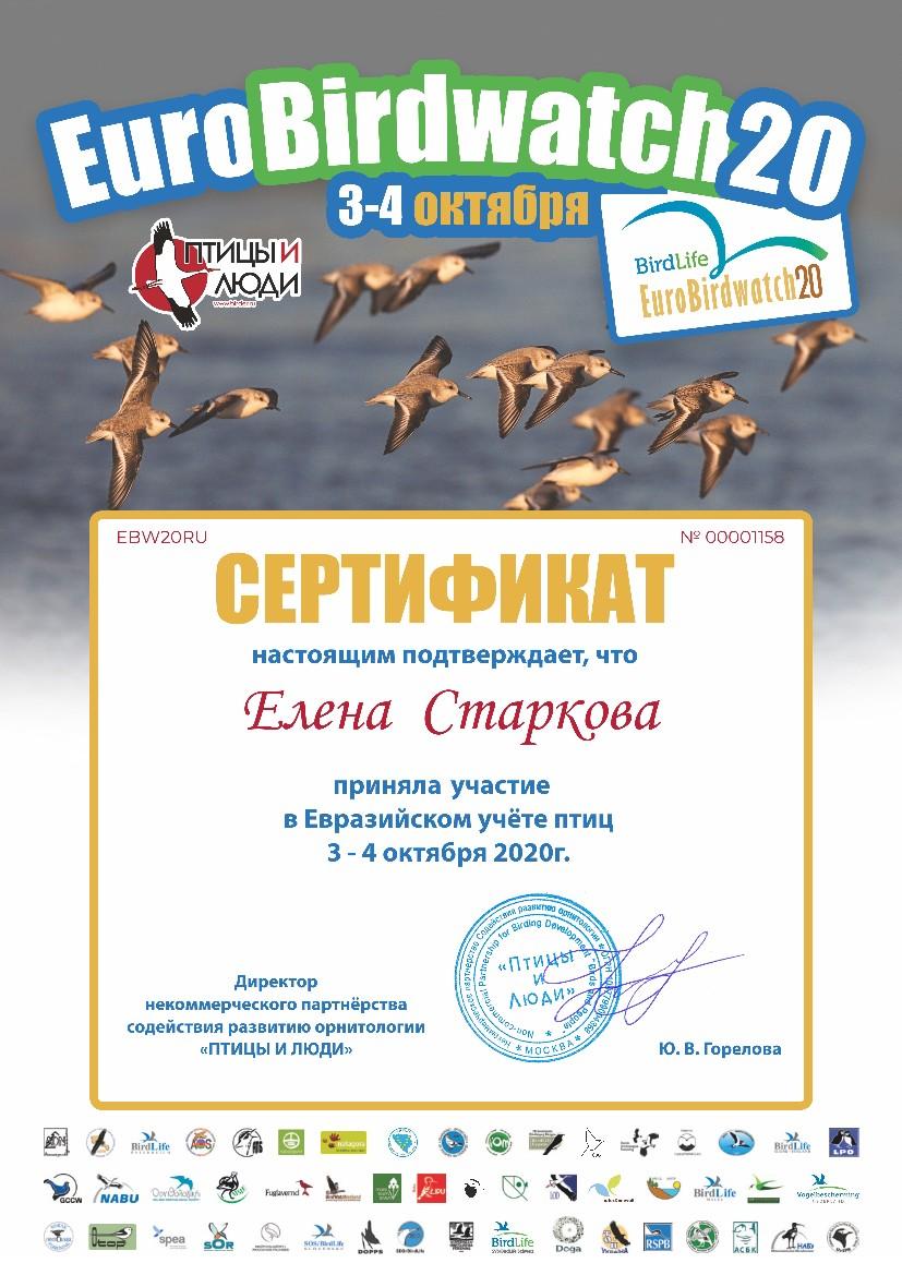Учёт птиц в Воткинске и Ижевске
