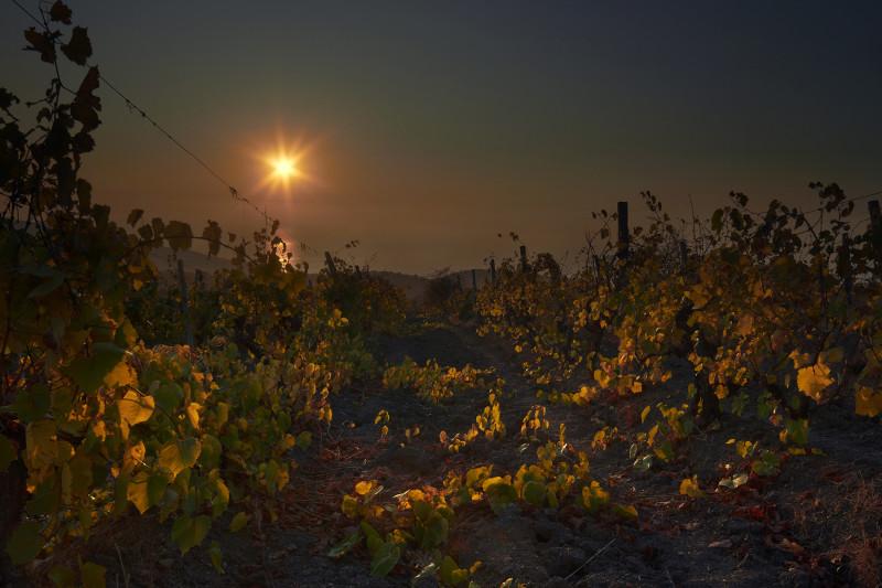 Рассвет на крымских виноградниках. Canon 550D, объектив kit 18-55.