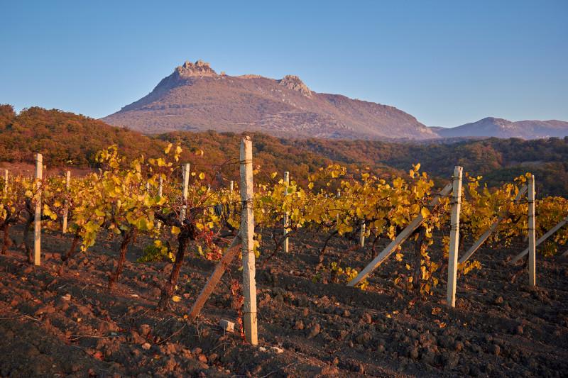 Виноградники у подножия гор Демерджи