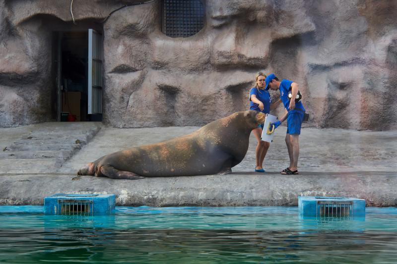 Несейка в Ижевском зоопарке