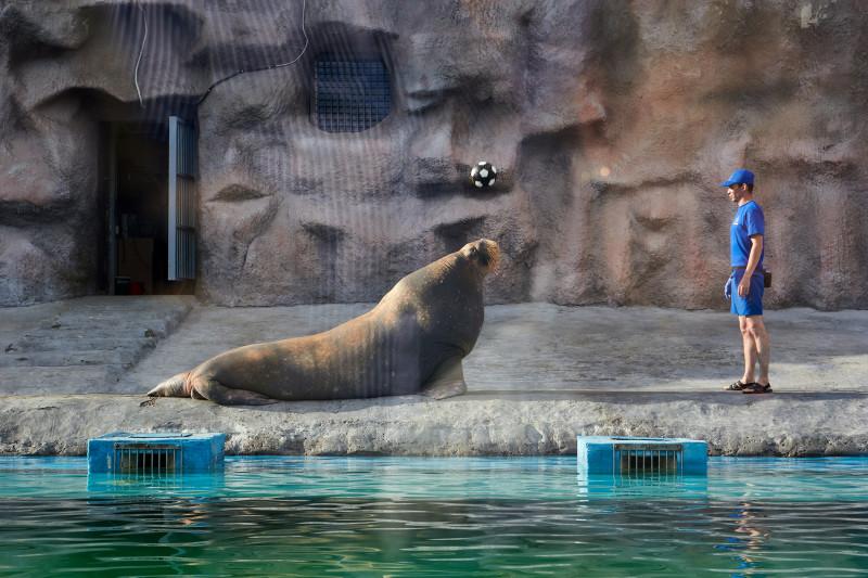 Несейка с Ижевском зоопарке