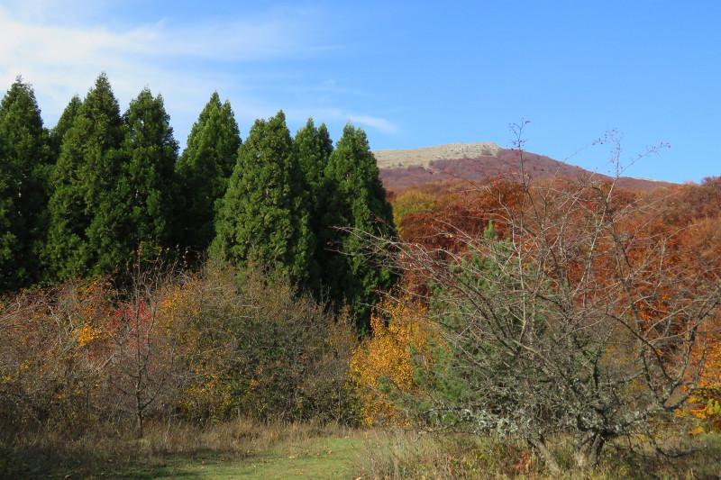 Слева аллея секвойи