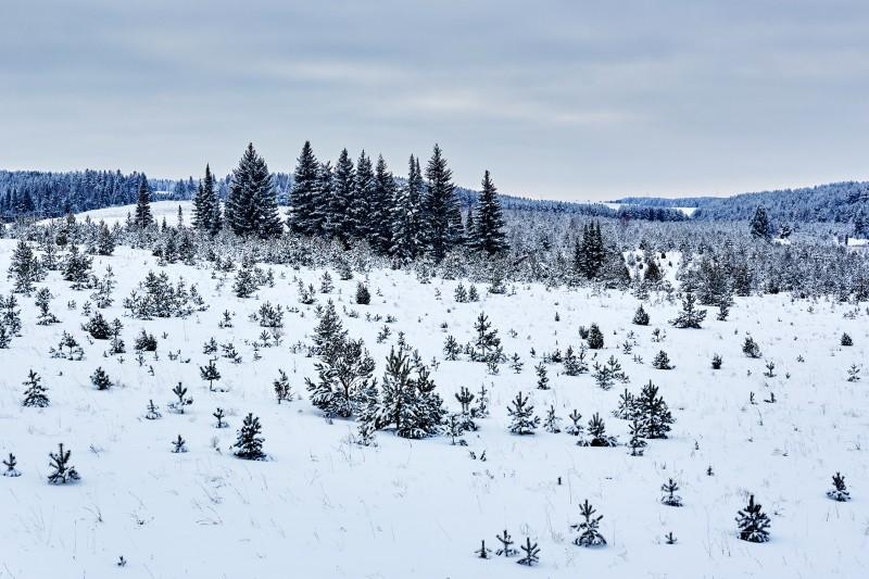 Лесные просторы Удмуртии