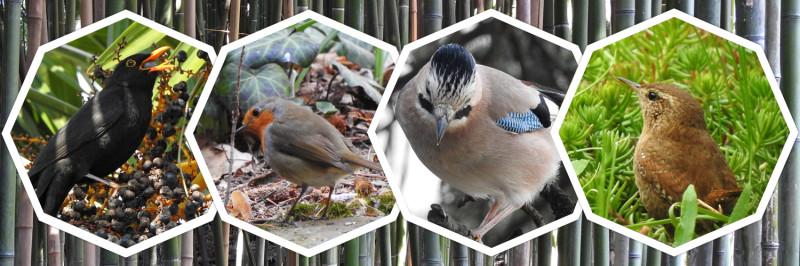 Крым. Разнообразие пернатых в Никитском ботаническом саду