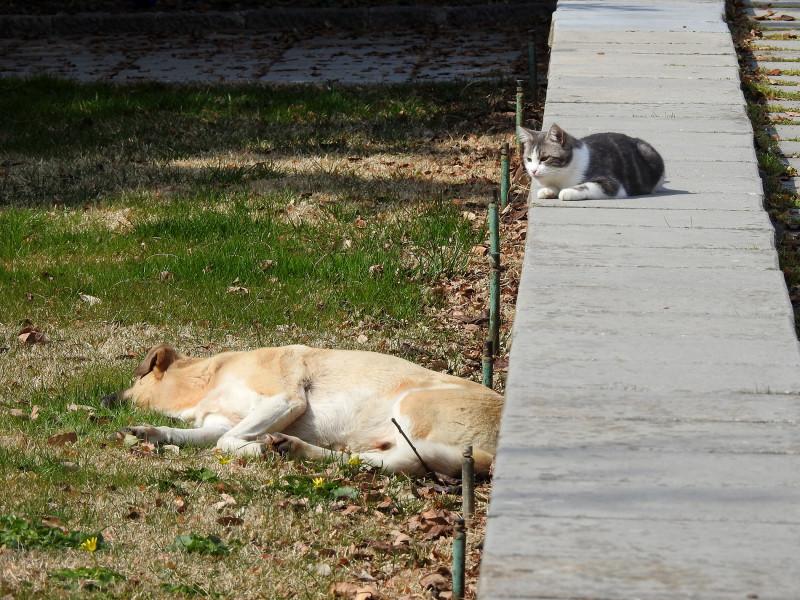Вокруг спящей собаки...