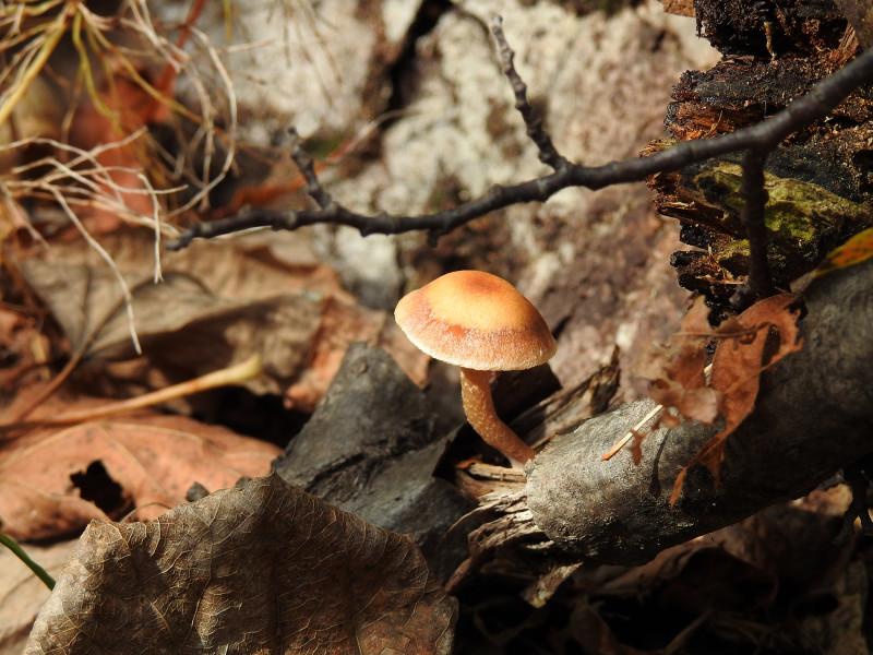 Лесные фотозарисовки