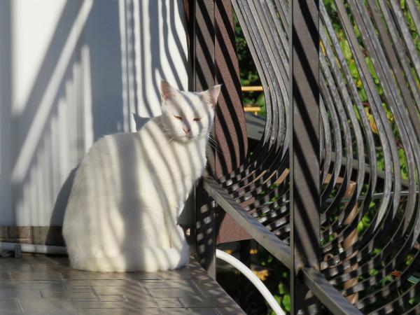 Рыжий кот и белая кошка