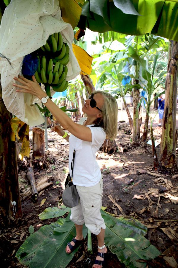banana_plantation5.jpg