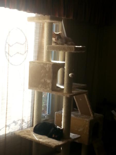 Cat Fort Bravo Occupied