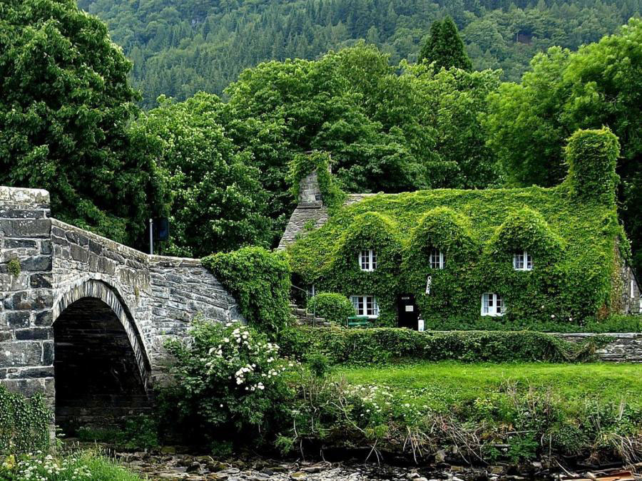 Ivy-Covered-House-in-the-woods