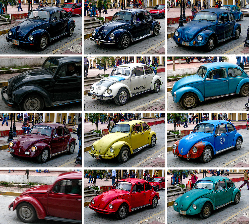 beetles small