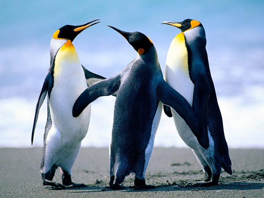 Penguins in community