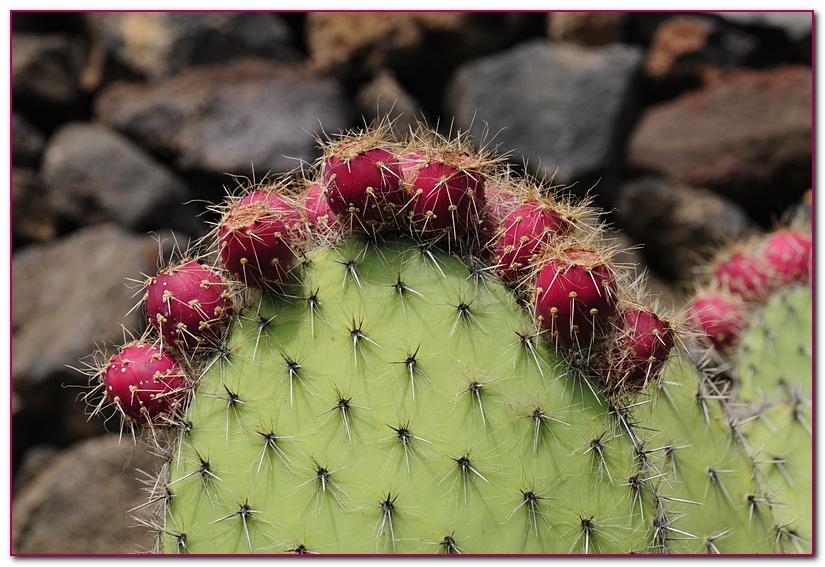 cactus F3