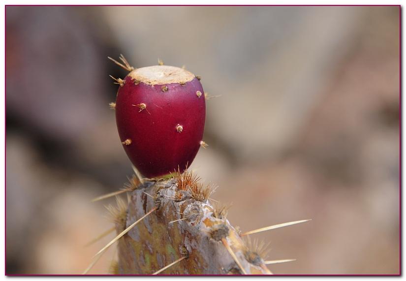 cactus F4