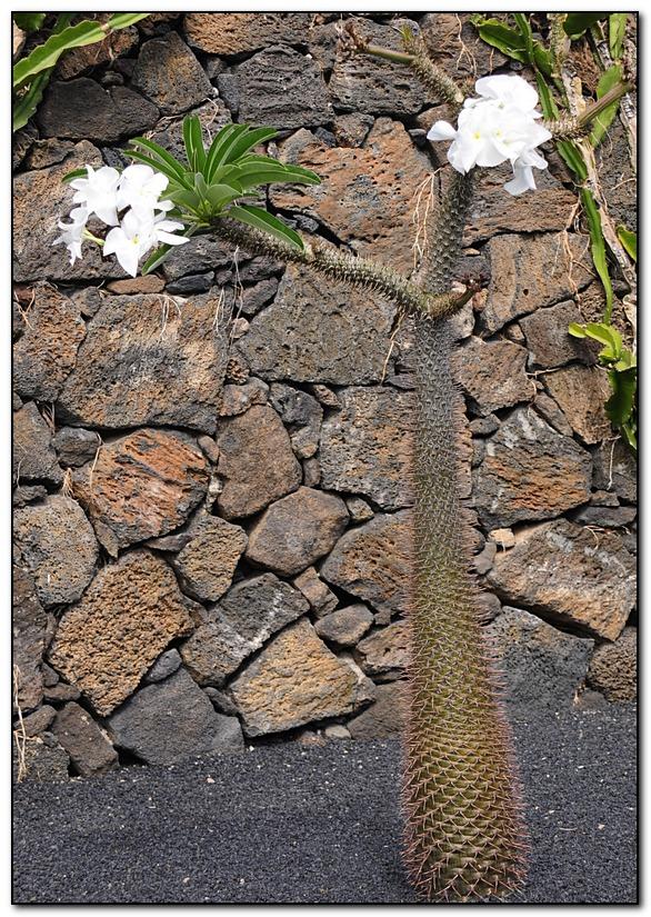 cactus F5