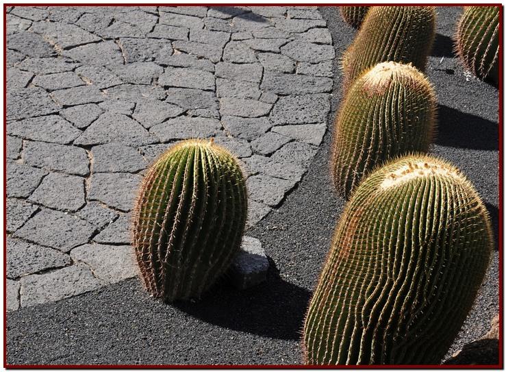 cactus 1a